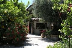 olivetree0002
