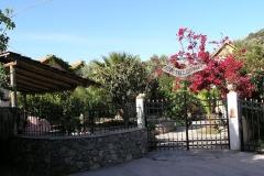 olivetree0003