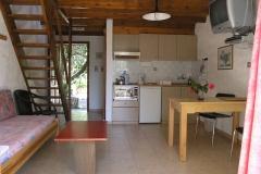 olivetree0009