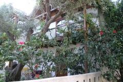 olivetree0017